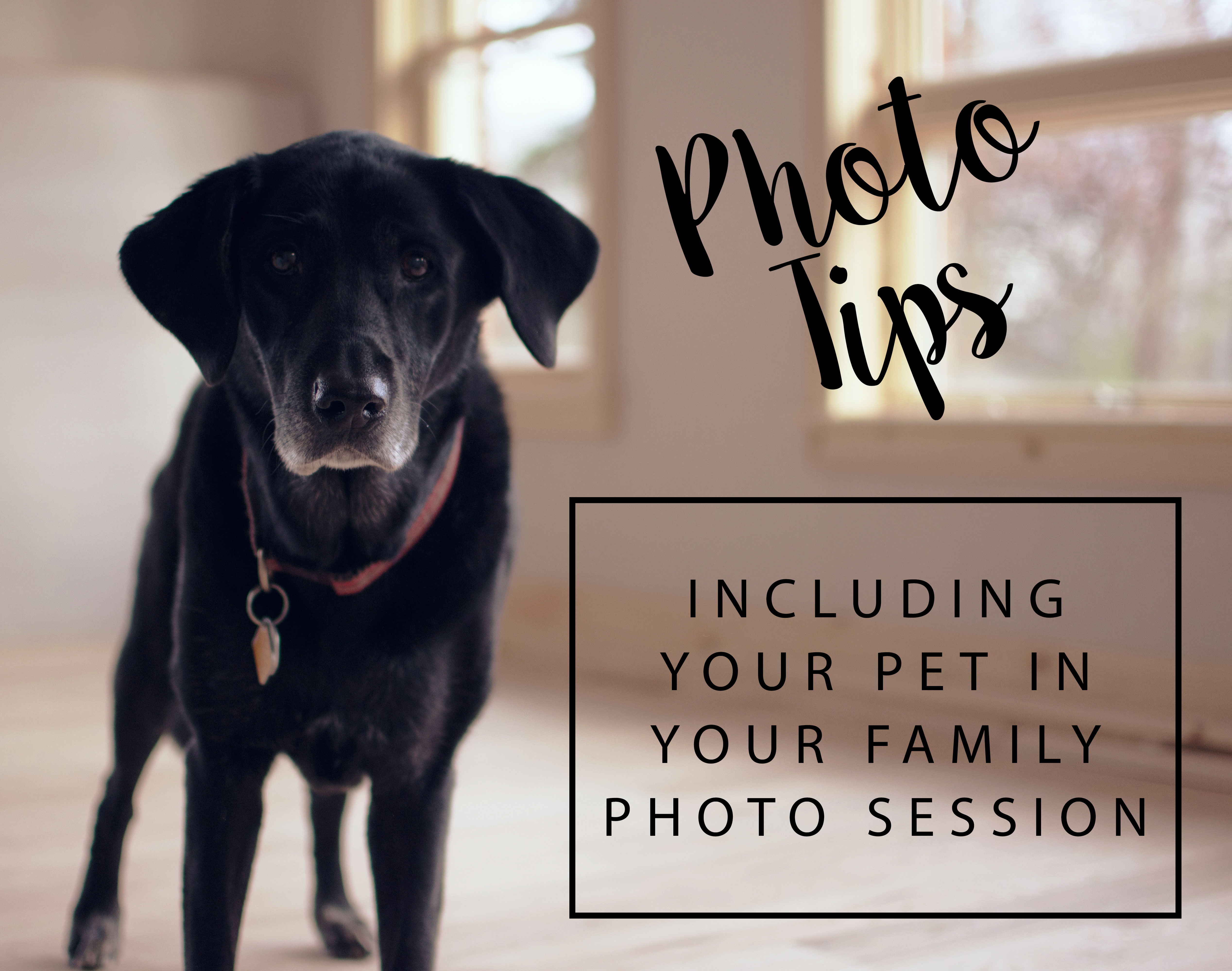 Including Your Pet In Your Session